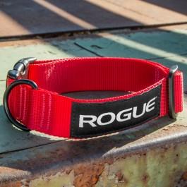 Rogue Nylon Dog Collar